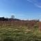Vacant Land 14.6 acres w/ Blueberries For Sale