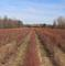 Farm Home on 76 ac. w/ mature blueberries