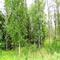 40 wild acres Ogemaw County